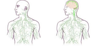 new-lymphatic-system-map